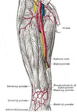 arterias de los miembros inferiores